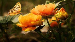 ورود برتقالية